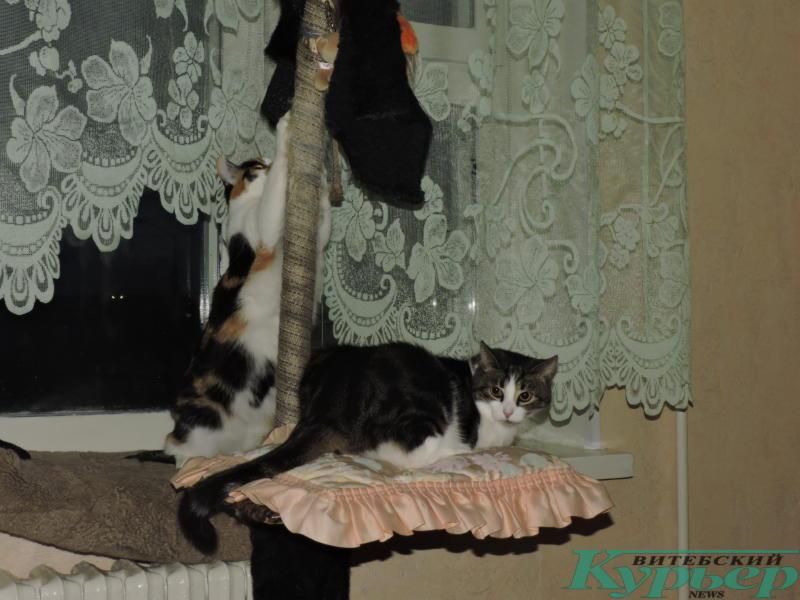 коты из приюта дома