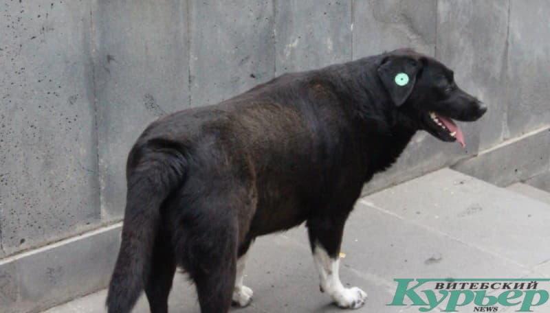 """В Тбилиси по улицам разгуливают собаки с """"клипсой"""""""