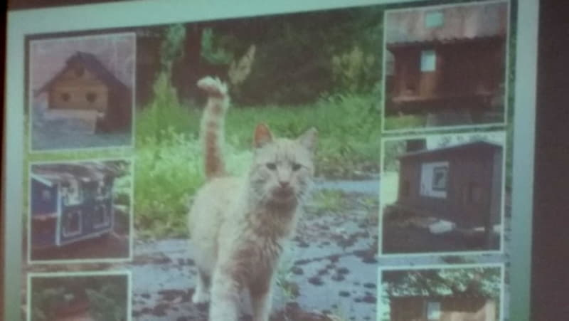 Солвита Виба продемонстрировала домики для котов в Риге