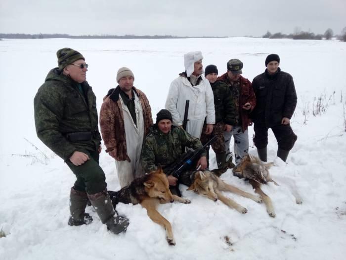волки, застреленные охотниками