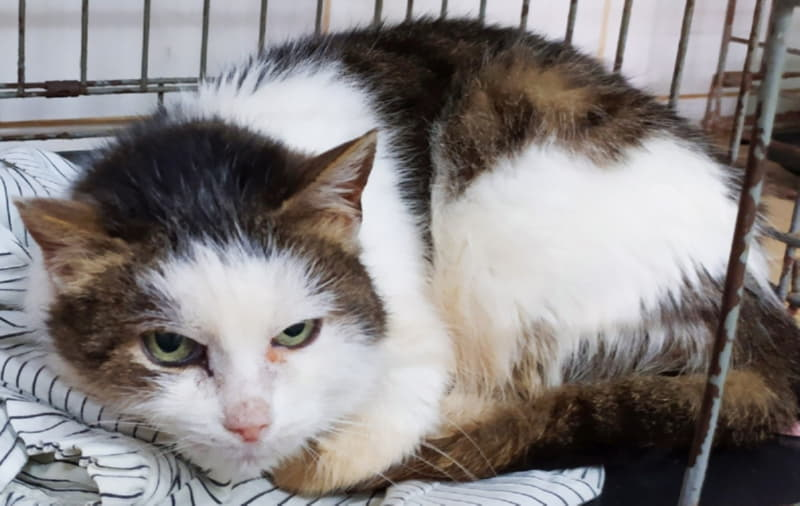 Приютская кошка Глория ждет хозяев
