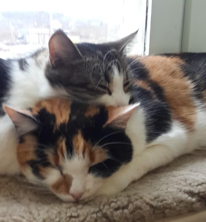 парочка котов