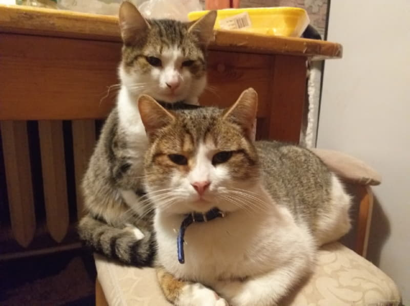 Правда, котики похожи?