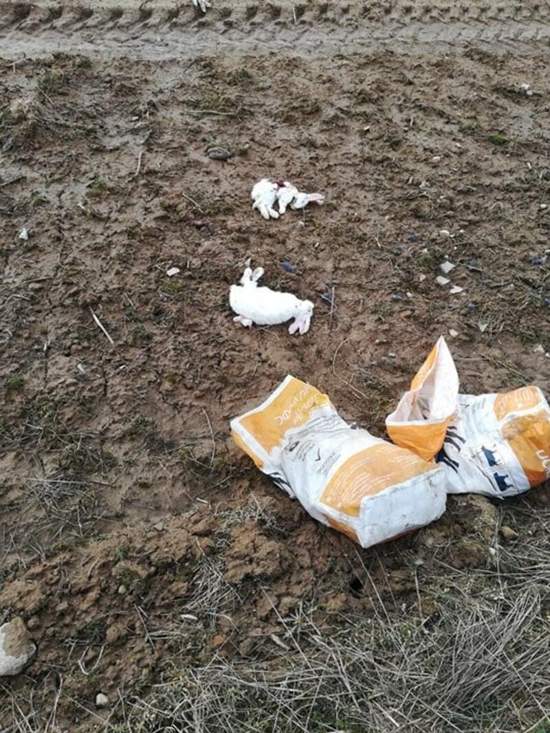 мертвые кролики в мешке