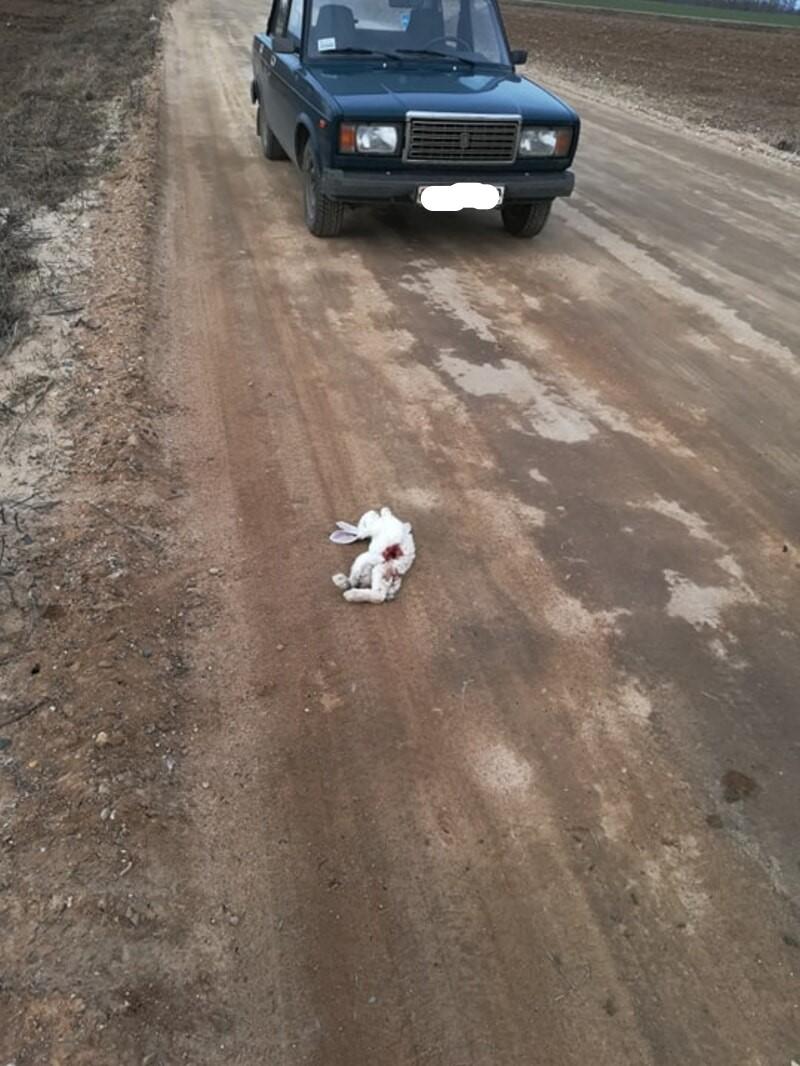 мертвый кролик на дороге