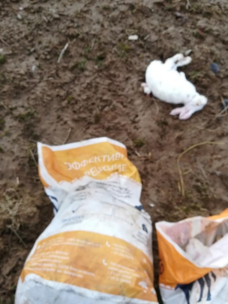 мертвый кролик