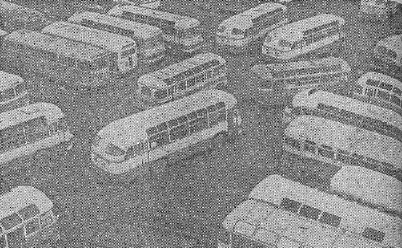 1964 год. Витебские автобусы