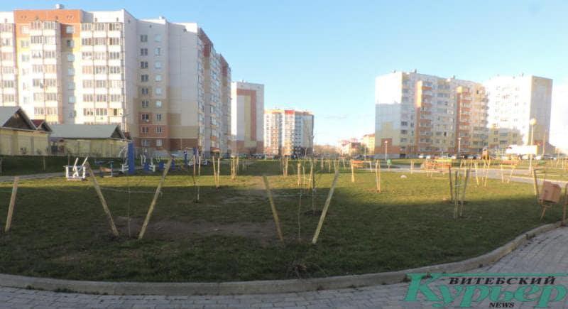 Деревья высадили на площадке, где дети играли в футбол
