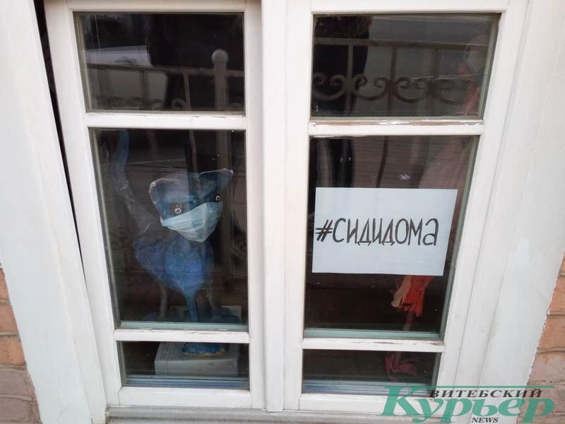 котик в медицинской маске в окне