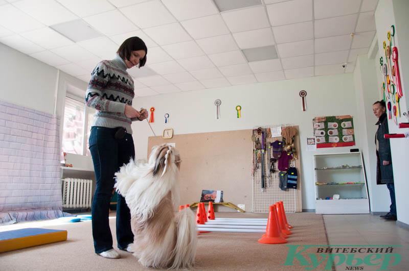 упражнение зайка фитнес для собак