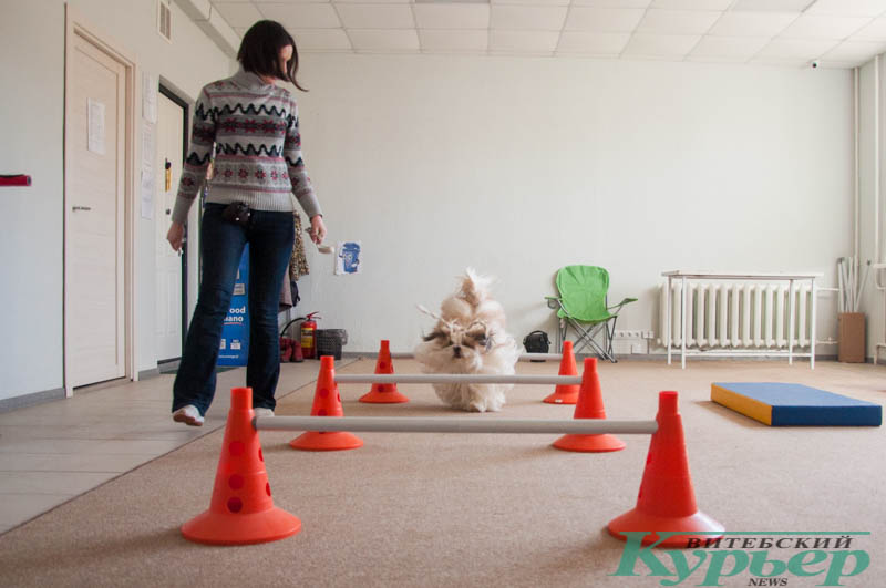 упражнения с барьером для собаки