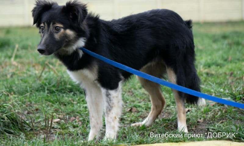 Лавине всего 9 месяцев и она будет по росту нижне среднего размера