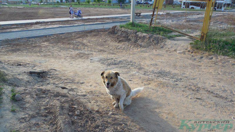 Собака из стройгородка