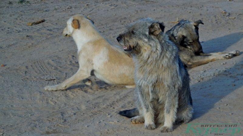 Собаки из стройгородка Билево-2