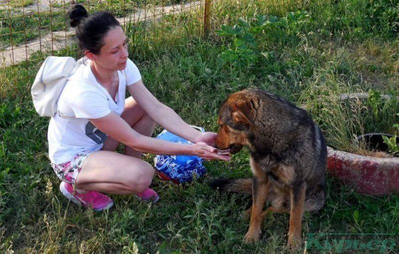 Бродячих собак можно покормить с рук