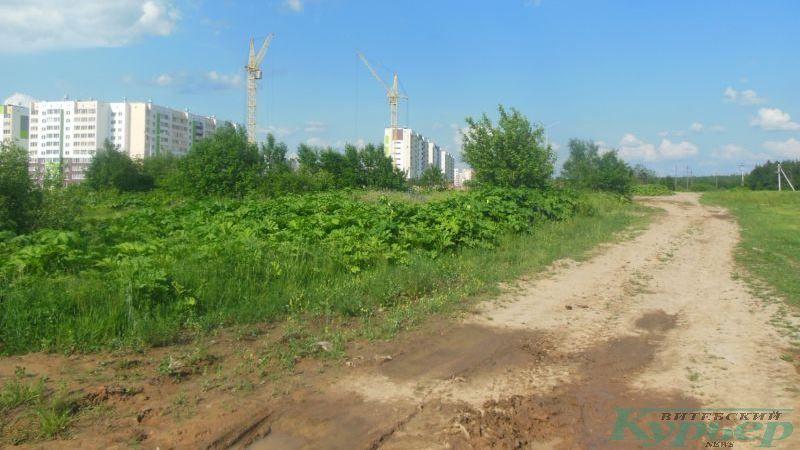 Проселочная дорога в Билево