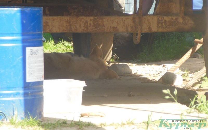 Собака под вагончиком в стройгородке