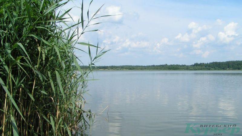 Озеро в Сосновке