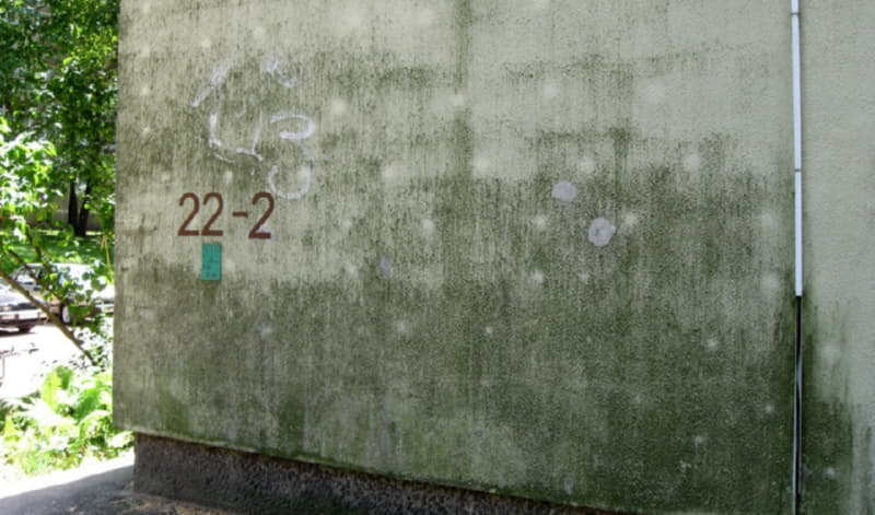 Плесень на фасаде