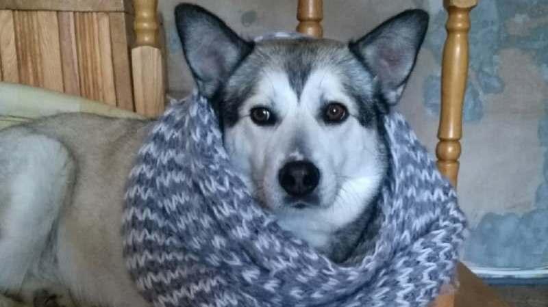 Собака в шарфике