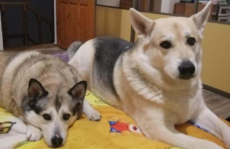 Две собаки в одной семье