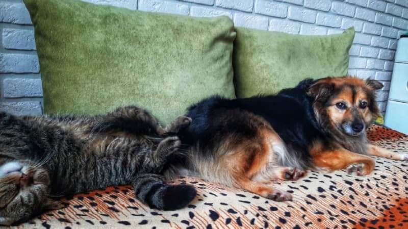 Бывшеприютская собака Дана дружим с котами