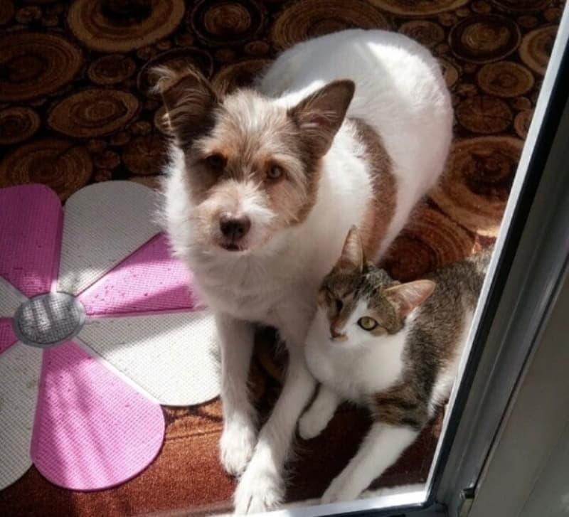 Лилу стала приемной мамой для кошки