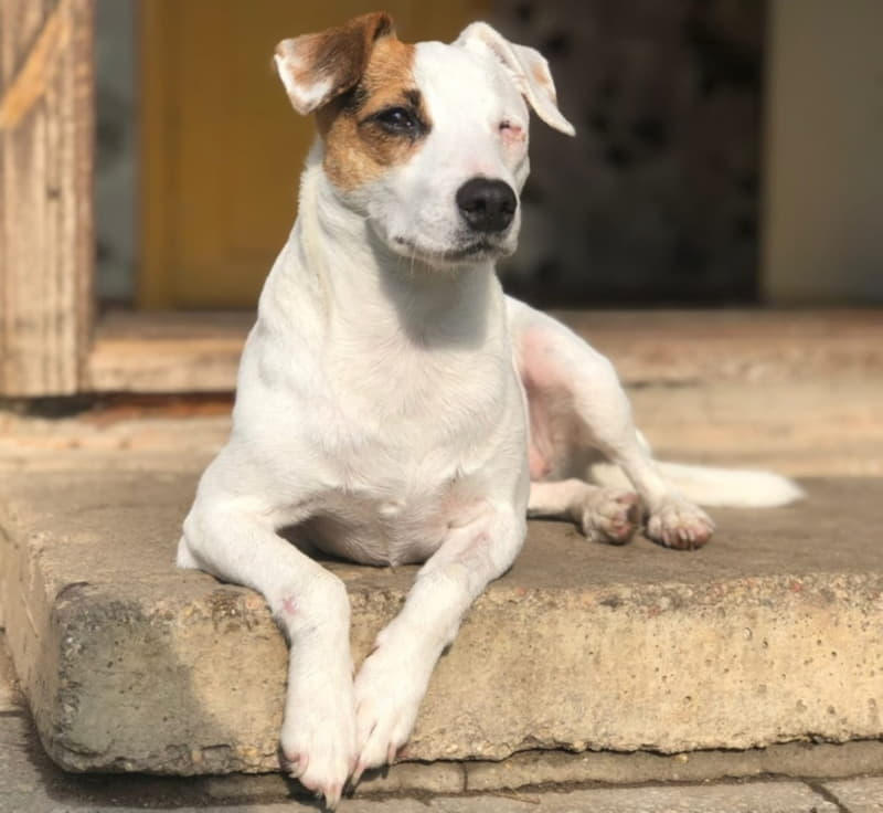 Собака с одним глазом