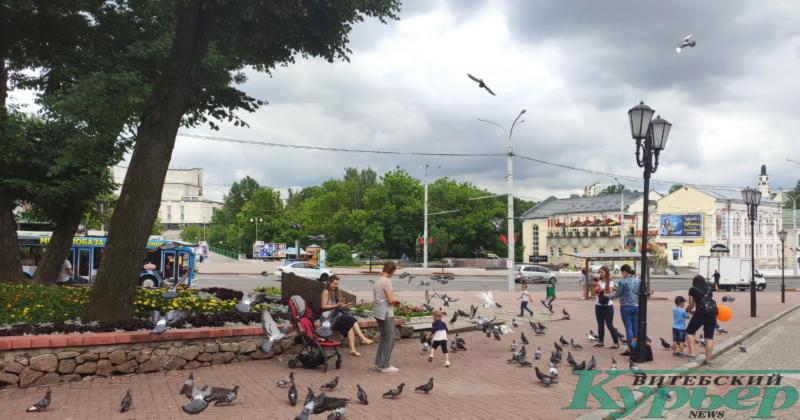 Возле Ратуши дети кормили голубей