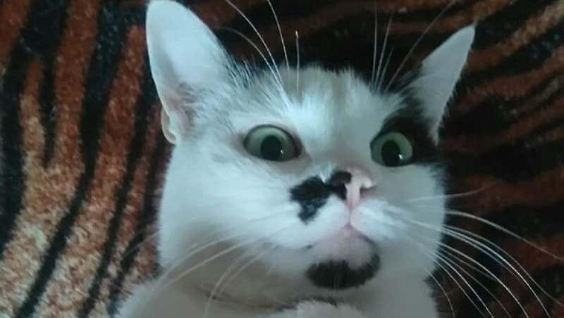 Тима - бывшеприютский кот