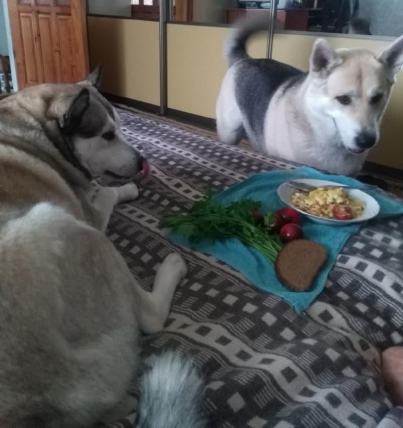 Челси и Юта живут в одной семье
