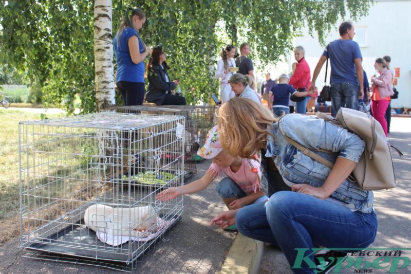 На акции в приюте смотрели животных