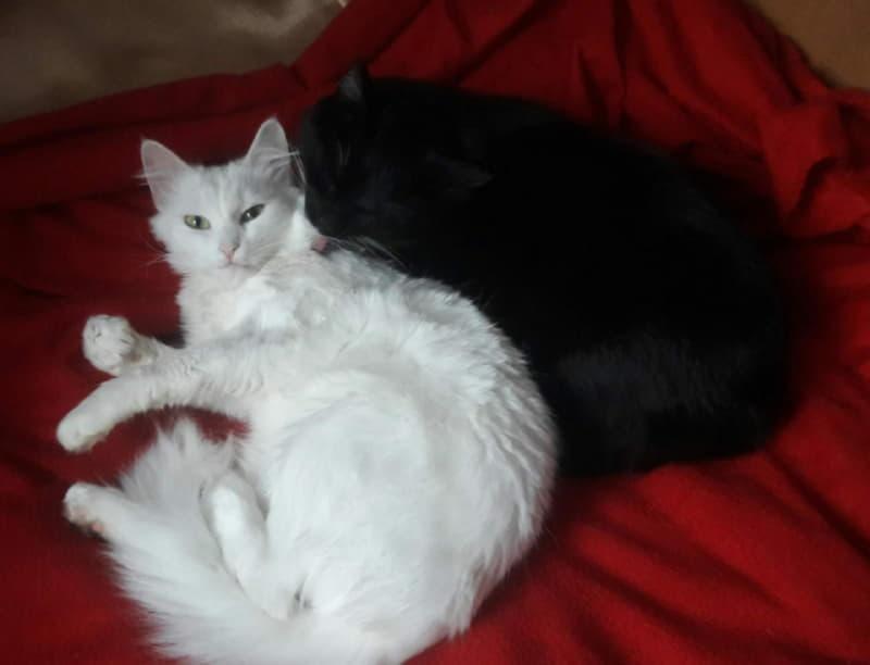 Две кошки - лучшие подружки