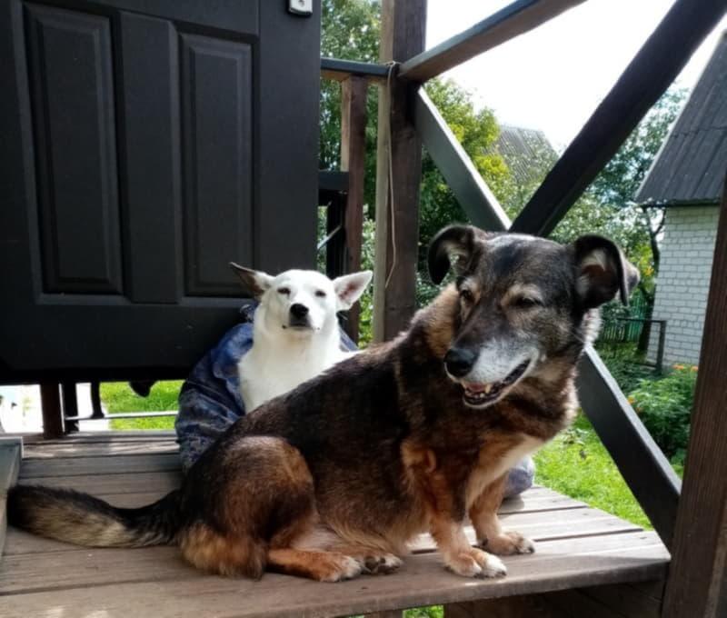 Собаки из приюта