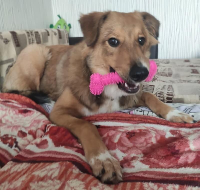 Собака с любимой игрушкой