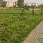 В парке 1000-летия в Витебске заложили очередную аллею