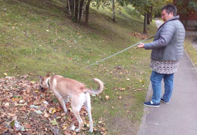 На прогулке с собакой